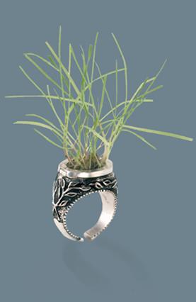 treasure-ring-image